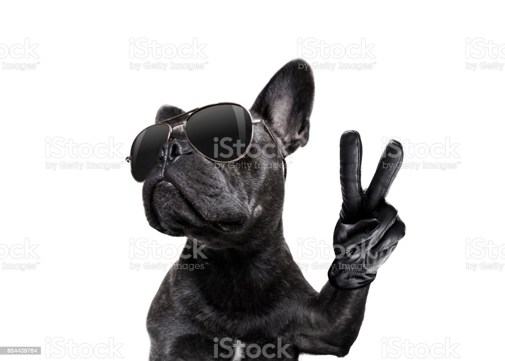 posing dog with sunglasses and peace fingers royalty-free stock photo