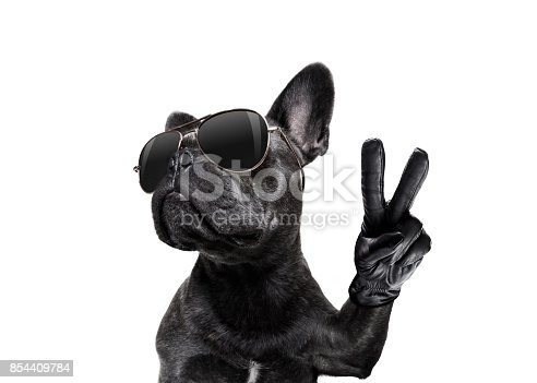 istock posing dog with sunglasses and peace fingers 854409784