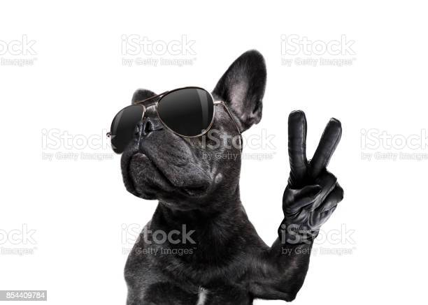 Posing dog with sunglasses and peace fingers picture id854409784?b=1&k=6&m=854409784&s=612x612&h=3wk3qrwlteaemrnq7hwyx9przmm13k6luir22wc7xwe=