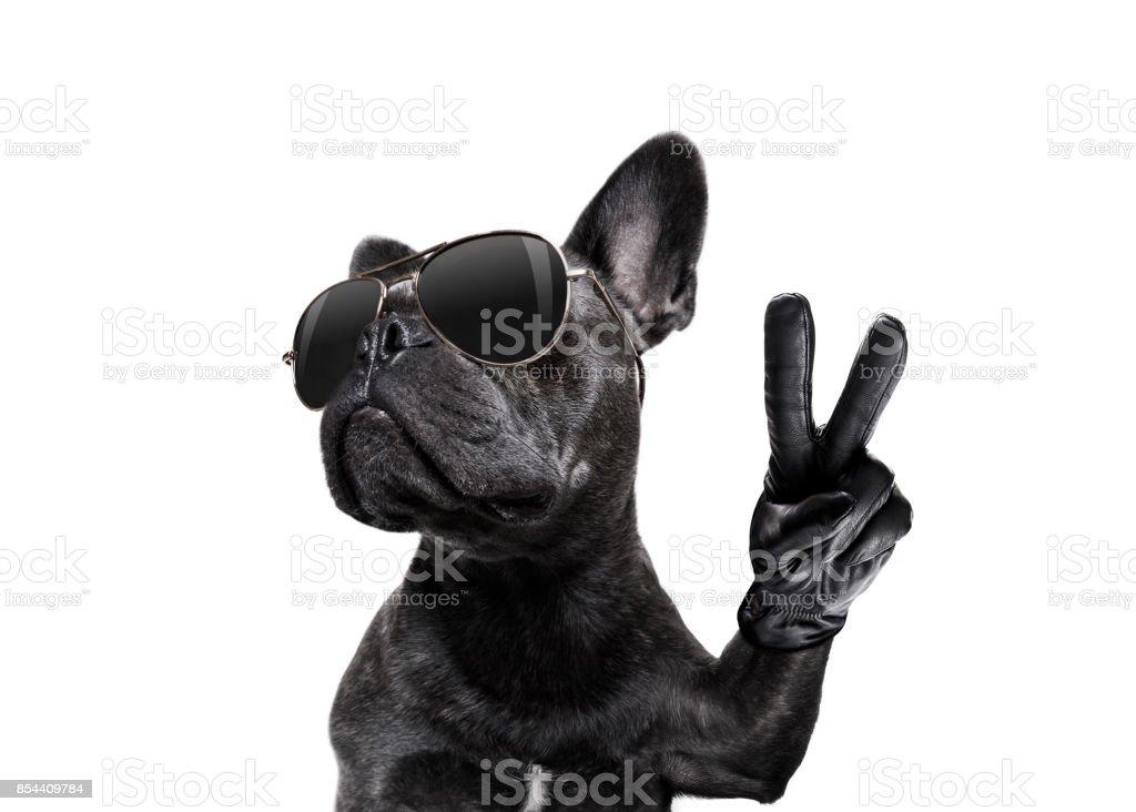 Hund mit Sonnenbrille und Frieden Finger posieren – Foto