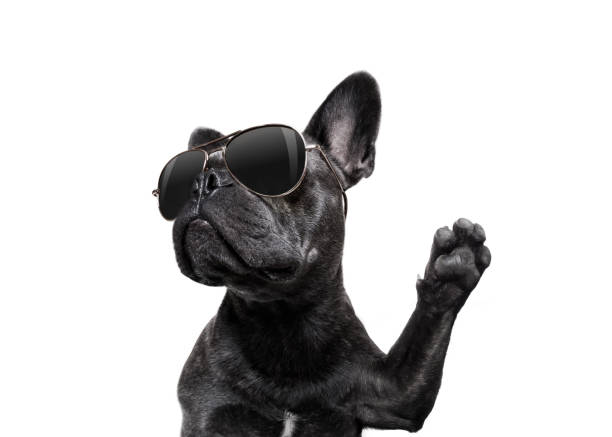 posing dog with sunglasses high five stock photo