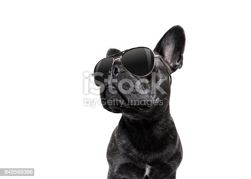 istock posing dog with sunglasses 845569386