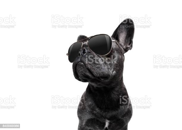 Posing dog with sunglasses picture id845569386?b=1&k=6&m=845569386&s=612x612&h=5zyxyqqhtshu69or9fp06vutsxcevsjdyhk sg1c49y=