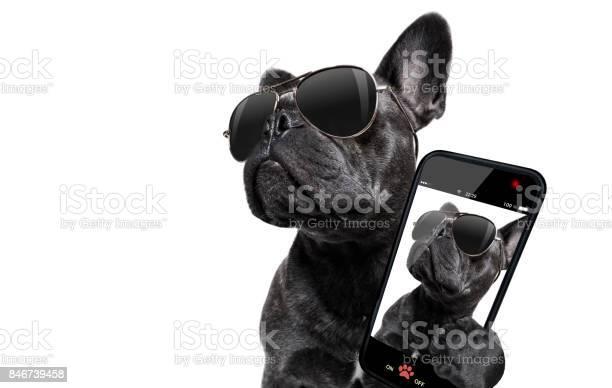 Posing dog with sunglasses picture id846739458?b=1&k=6&m=846739458&s=612x612&h=a34m3zikeih2w9tsqoajydhrhhnerixbxyzuvfdgrfc=