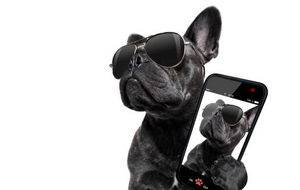 Posing dog with sunglasses picture id846739458?b=1&k=6&m=846739458&s=612x612&w=0&h=rmzgu1ikajzjk9dj1vxdmrmqhy kb kiswyrfz7s6lk=