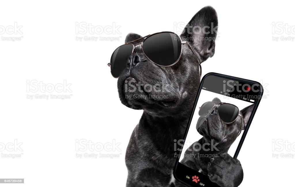 Hund mit Sonnenbrille posiert – Foto