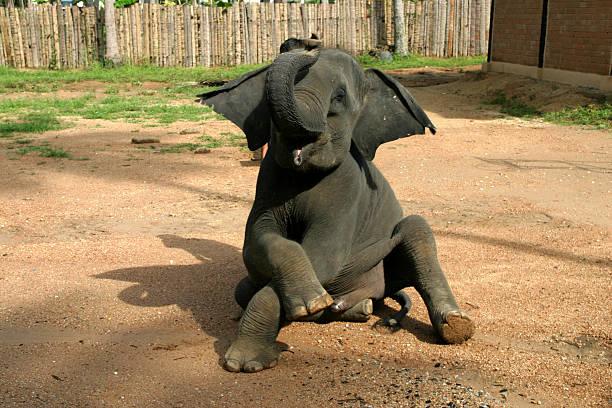 Posing elephant stock photo