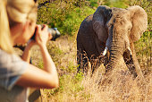 Cropped shot of a female tourist taking photographs of elephants while on safarihttp://195.154.178.81/DATA/i_collage/pi/shoots/806259.jpg