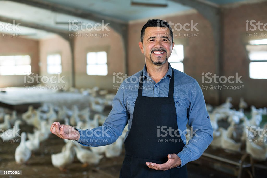 Positive man standing among gooses livestock royalty-free stock photo