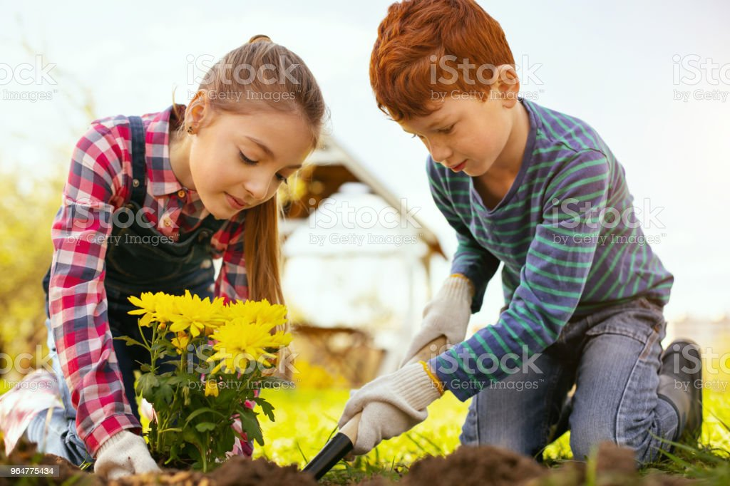 Positive pleasant children working together royalty-free stock photo
