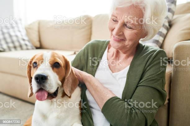 Positive senior owner stroking dog picture id950847230?b=1&k=6&m=950847230&s=612x612&h=jjcc5m3bprzubwullv sqlp y6jbdz9bydxj54w yus=