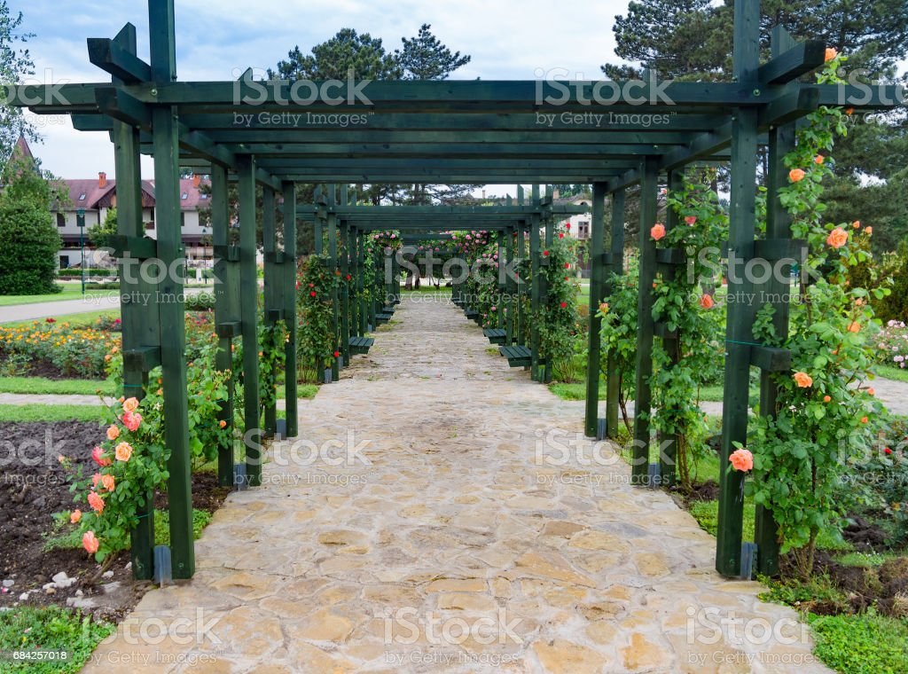 Post and beam pergola with flowering roses. Keszthely, Hungary. stock photo