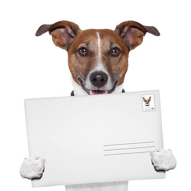 después de la envoltura y sello de correos de perro - postal worker fotografías e imágenes de stock