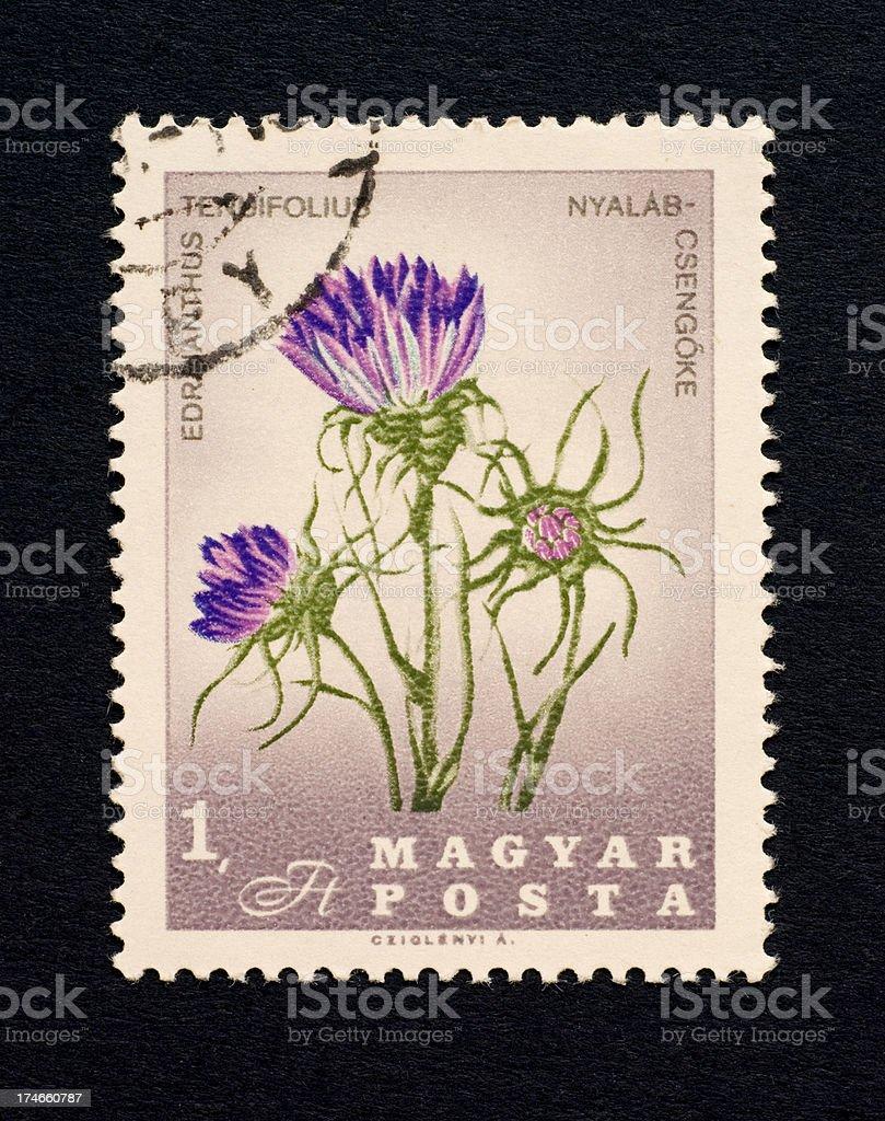 Postage Stamps: Edrianthus tenuifolius (Hungaria) stock photo