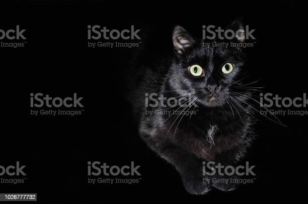 Postcard for halloween portrait of a black cat picture id1026777732?b=1&k=6&m=1026777732&s=612x612&h=7jv7tuair me4cyqt67rd1otu tvff6hmpl9 s cjbo=