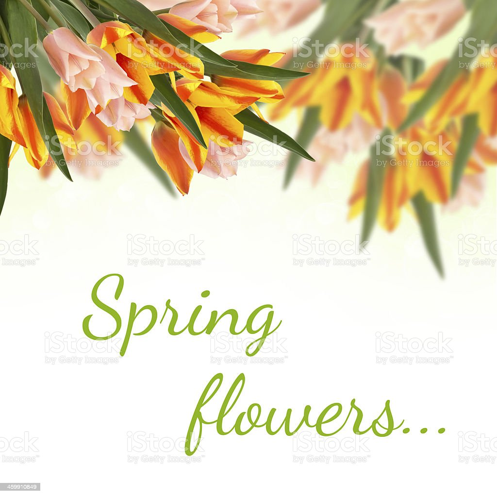 Postcard with fresh tulips  flowers stock photo