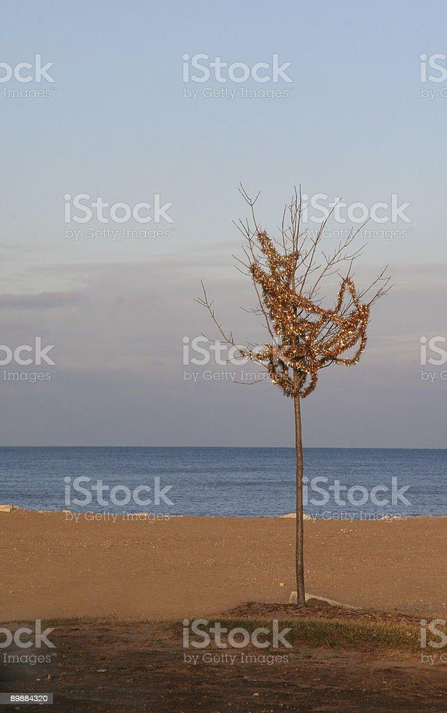 post-Christmas tree royalty-free stock photo