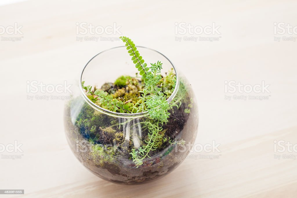 Pot and Glass Terrarium with Fern Plants stock photo