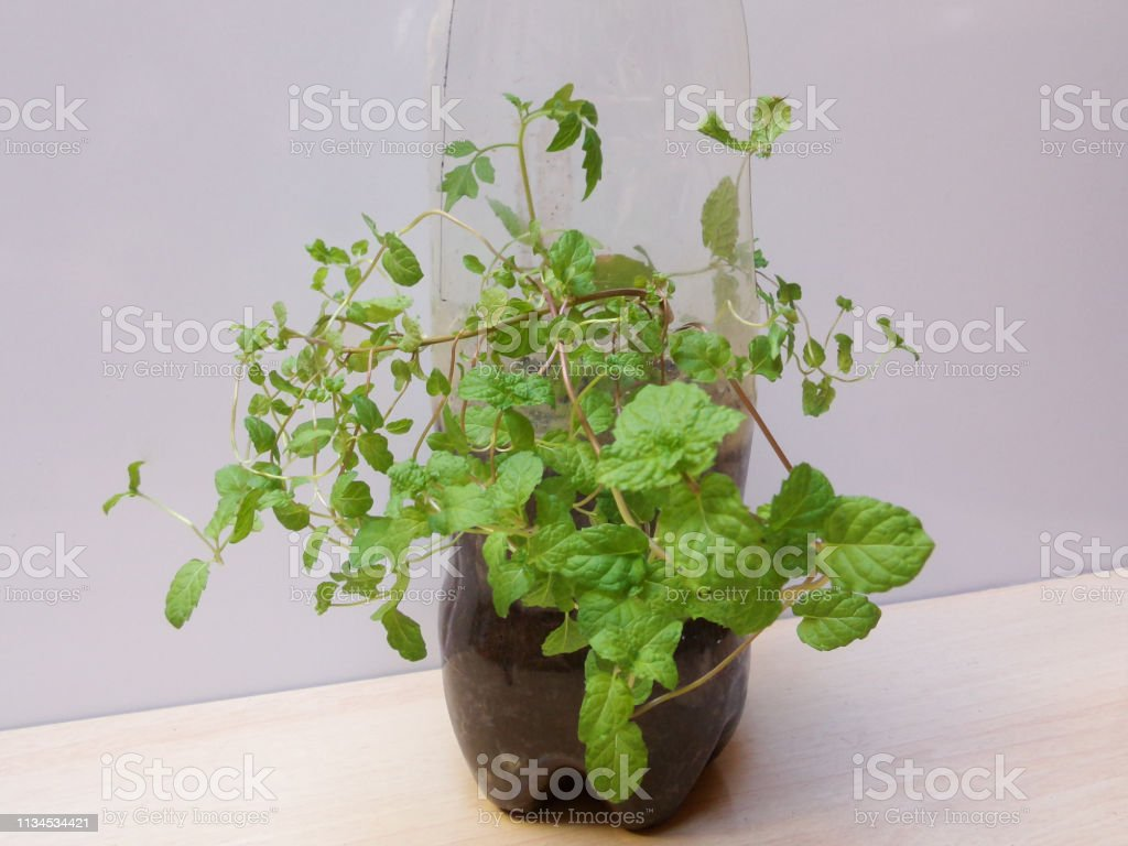 Pot Made With A Recycled Bottle Plant Pots Made Of Plastic Bottles Recycle Water Bottle Pot Sustainable Living Concept Stock Photo Download Image Now Istock