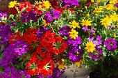pot of colorful flowers