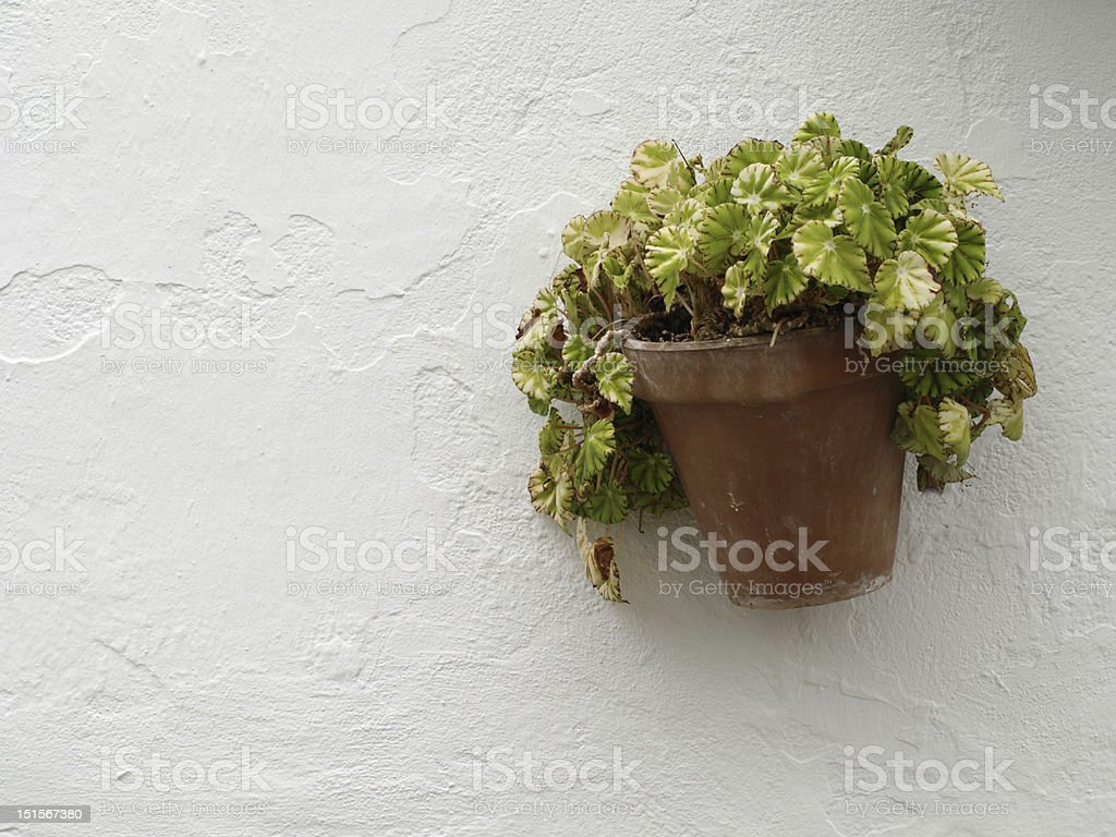Pot of flowers royalty-free stock photo