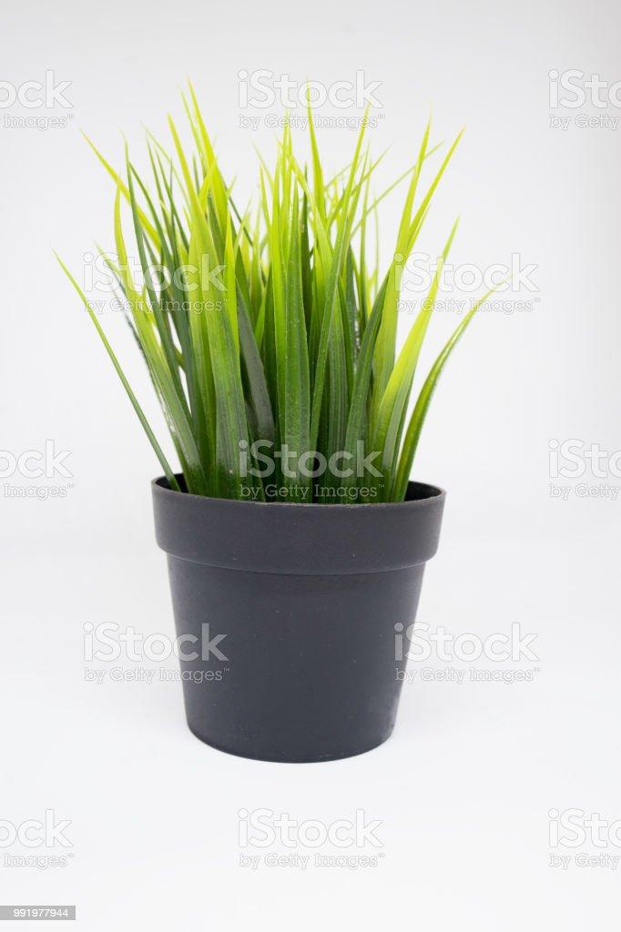 Grassen In Pot.Pot Met Groene Plant Grassen Geisoleerd Op Witte Achtergrond Stockfoto En Meer Beelden Van Binnenopname