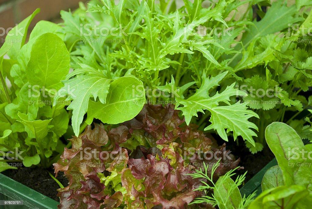 Pot of Green salad royaltyfri bildbanksbilder