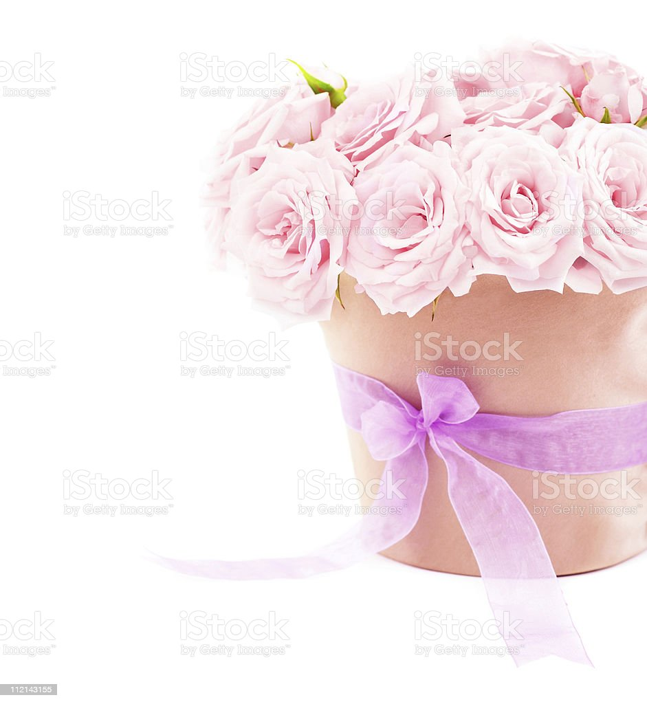 Pot of pink roses royalty-free stock photo