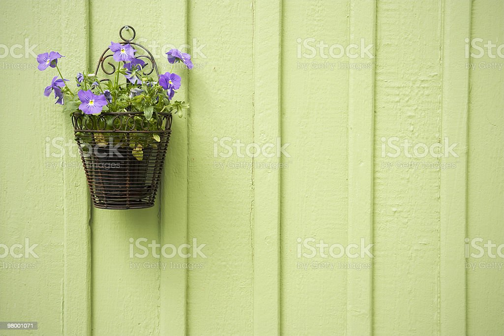 Pot plant decor royalty free stockfoto