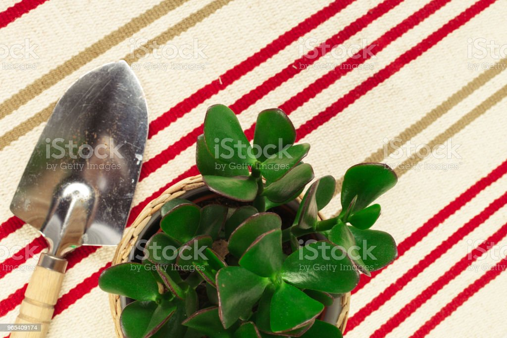 Pot plant royalty-free stock photo