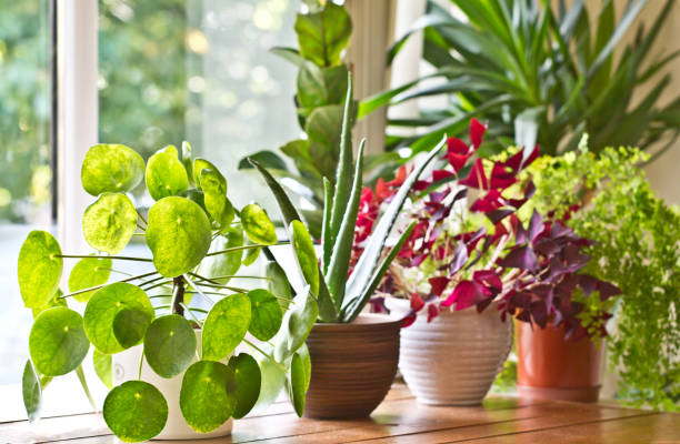 Pot plants display on the window stock photo