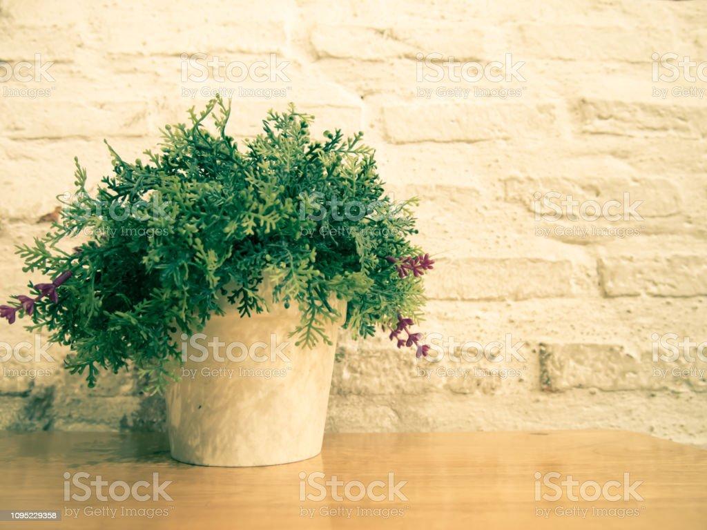 Pot Plante En Bois photo libre de droit de plantes en pot en pot blanc sur la