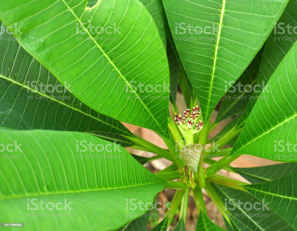 pot tree royalty-free stock photo