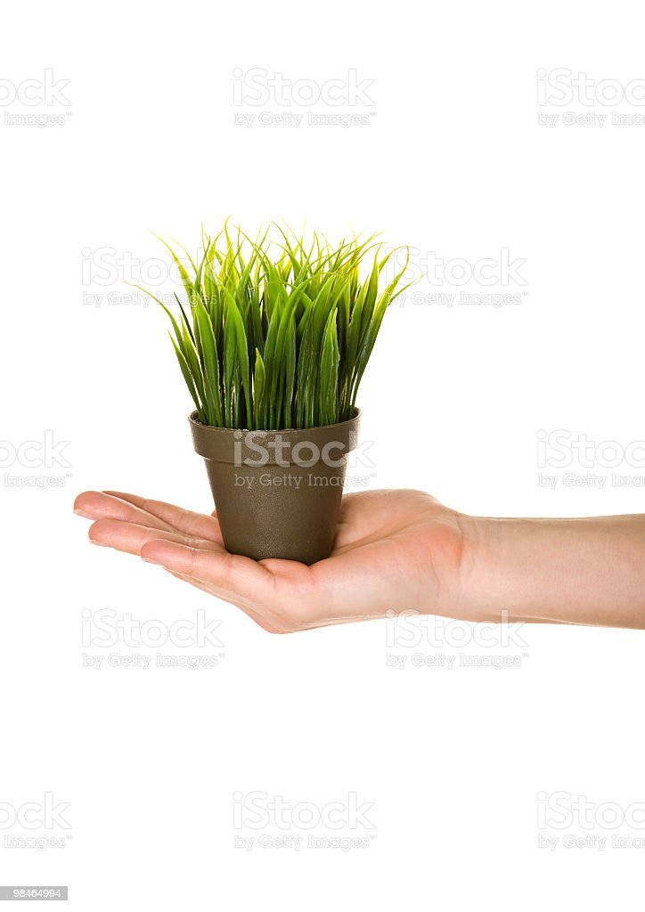 Pot with a grass. royalty-free stock photo