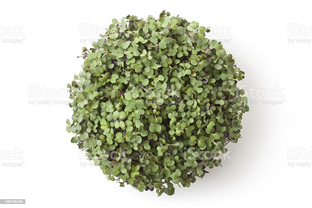 Pot with newborn sprouts of radish. Top view. royalty-free stock photo
