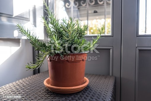 Pot with rosemary