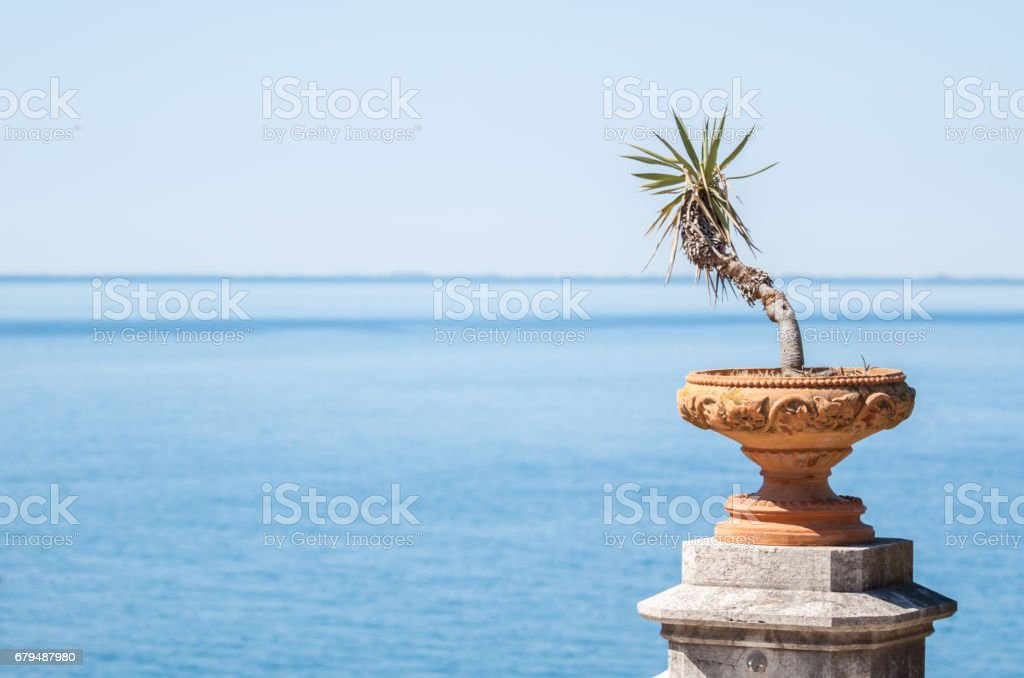 pot with small palm on blue background royalty-free stock photo