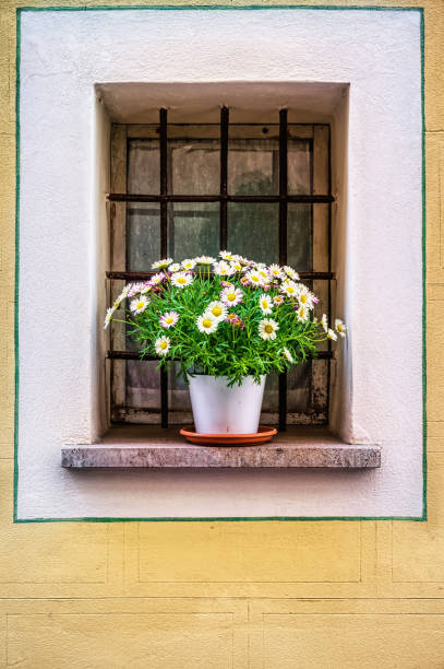 Pot with the flowers in the window stock photo