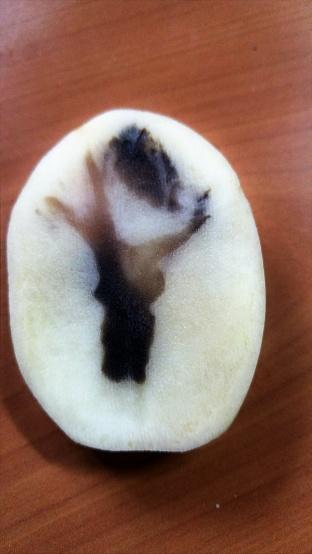 Potato Art Stock Photo - Download Image Now