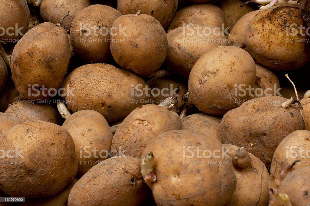 potato as background royalty-free stock photo
