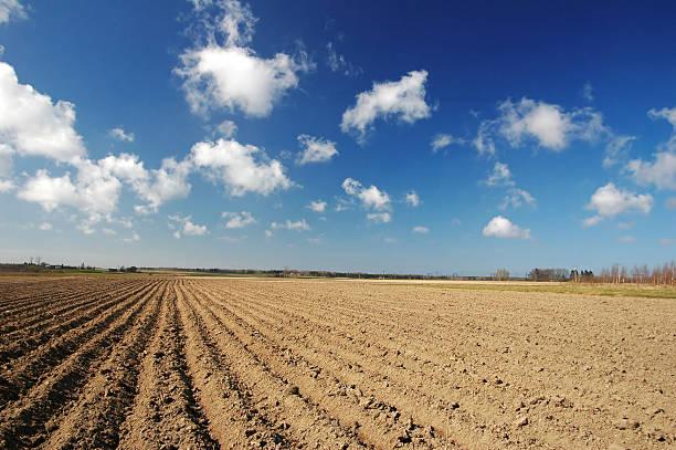 Kartoffel field – Foto