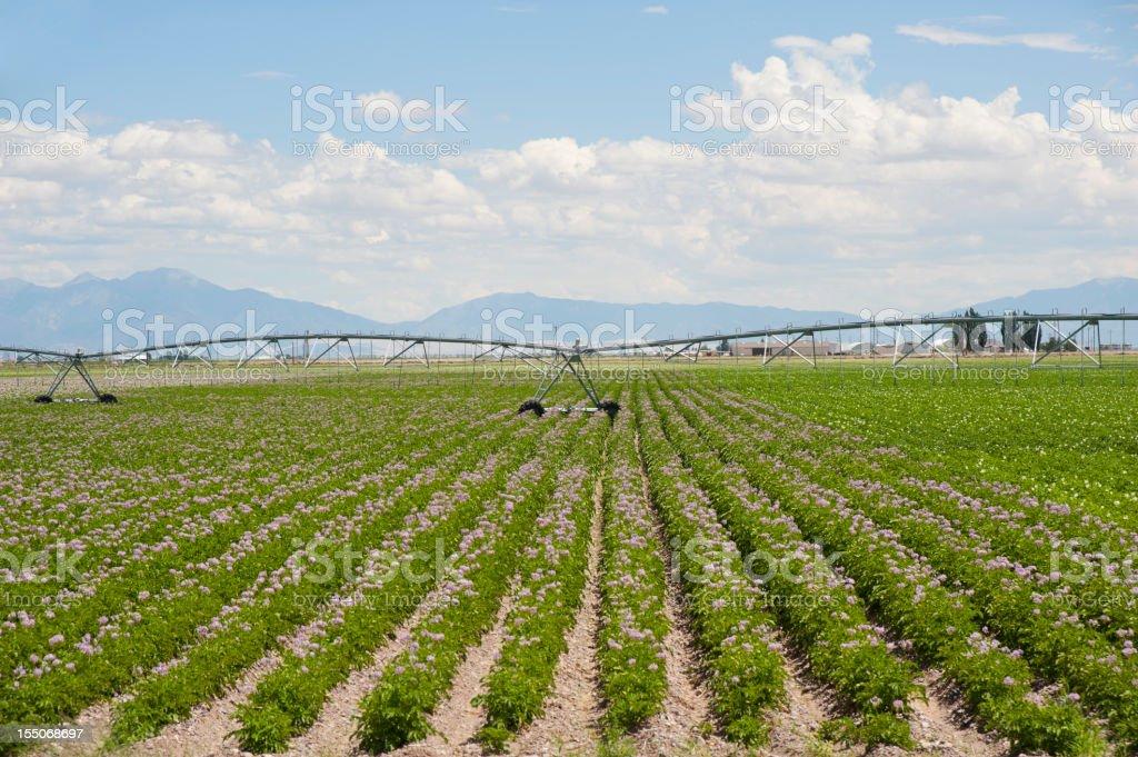 Potato Fields and Irrigation Equipment stock photo