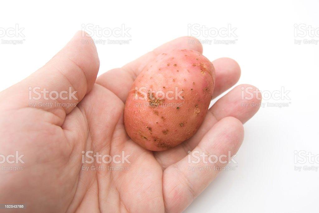 potato in hand royalty-free stock photo