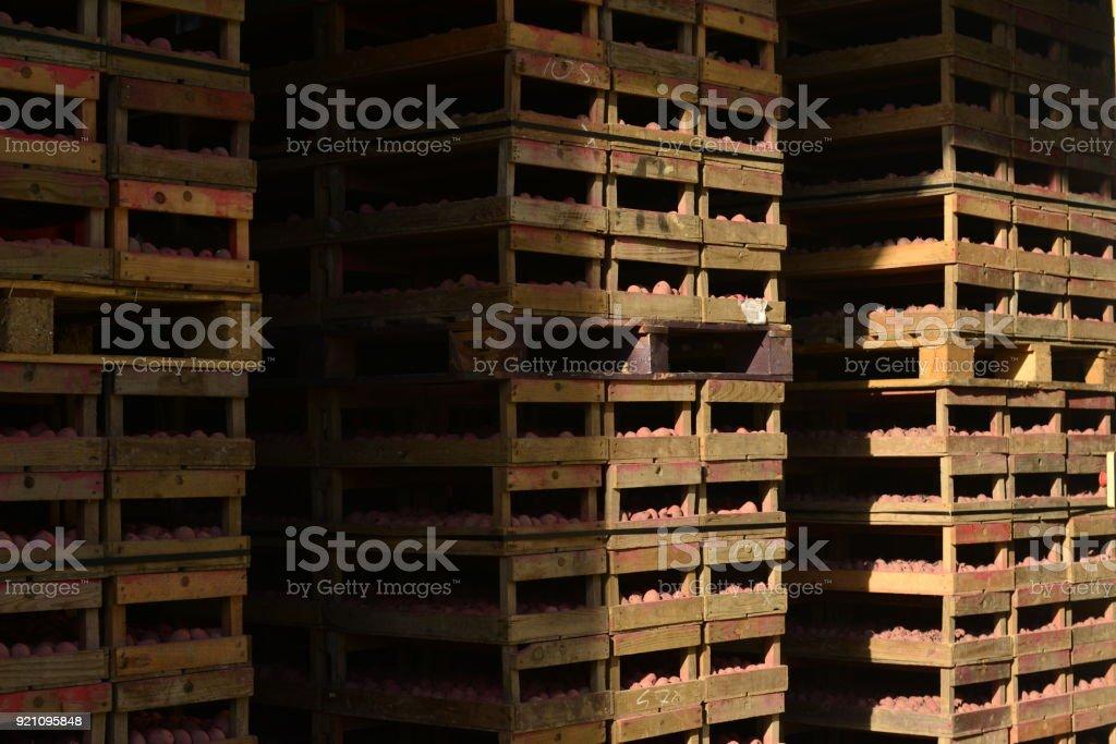 Potato packing shed, Jersey, U.K. stock photo