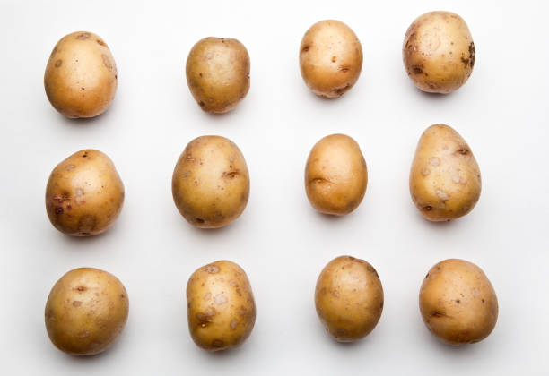 Potato studio stock photo