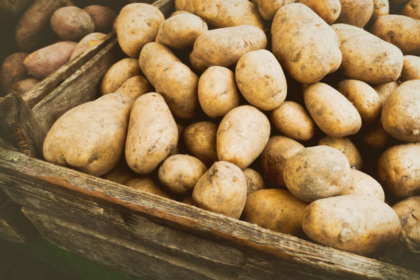 Potatoes at the vegetable market stock photo