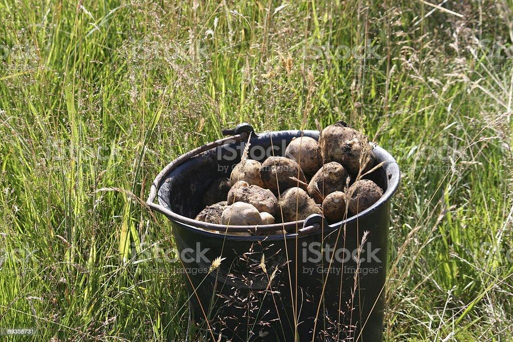 Ziemniaki w przedział zbiór zdjęć royalty-free