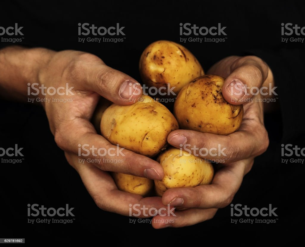 potatoes in male hands stock photo