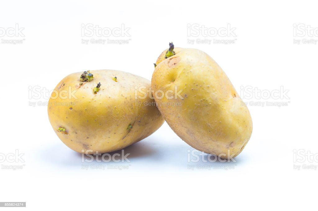 potatoes with sprouts isolated on white background stock photo