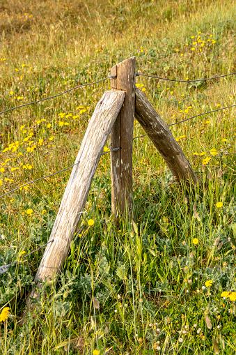 Poteau De Schutz Dans Un Champ Stockfoto und mehr Bilder von Feld